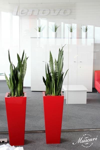 Nietypowy Okaz Kwiaty doniczkowe w przestrzeni biurowej | Muscari NY96
